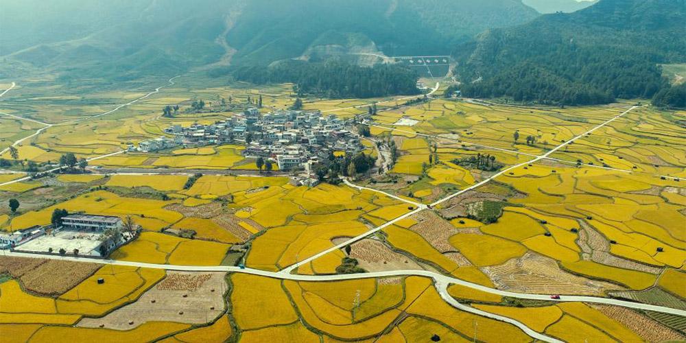 Paisagens de arrozais na vila de Longli, província de Guizhou