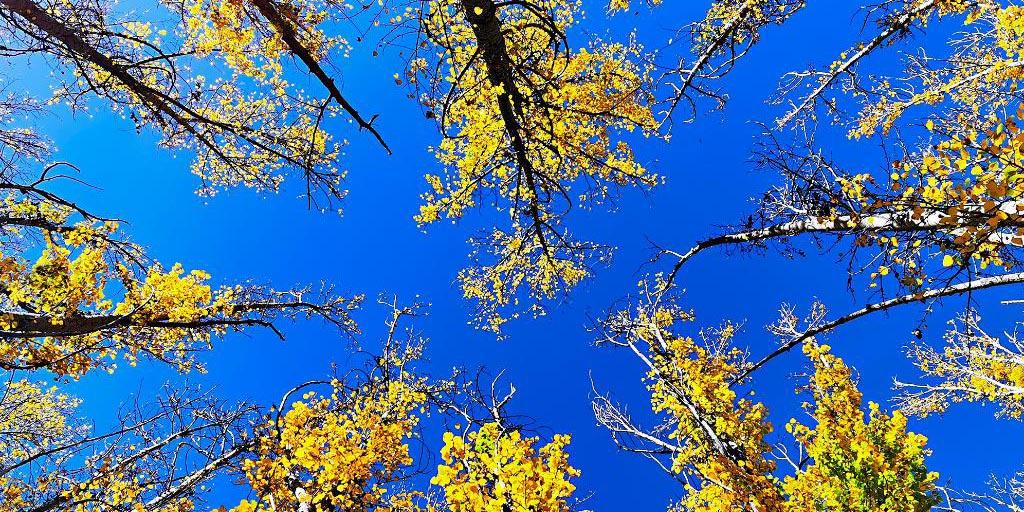 Paisagem de outono em Lhasa, Tibet