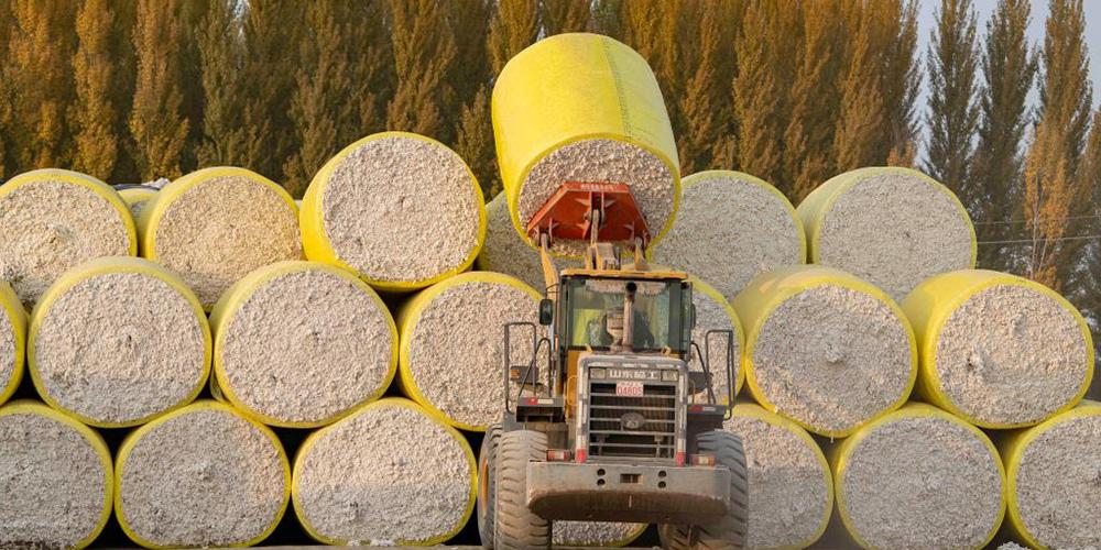 Xinjiang inicia temporada de colheita de algodão